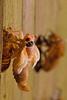 Young Cicada 1