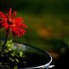 red flower tin planter
