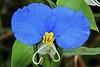 Asian Day Flower