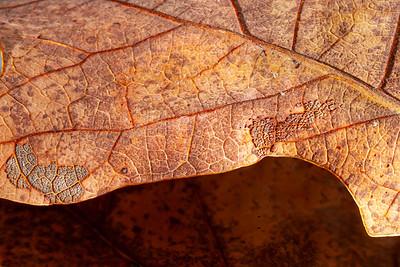 Falls last leaf