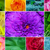 FLORAL_colorcollection 2