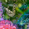 BUTTERFLY_resting_20160815_8093