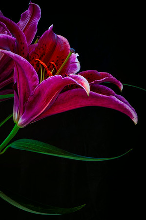 Floral Close-up 2<br /> © Sharon Thomas