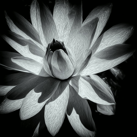 Water Lily - Textured 2<br /> © Sharon Thomas