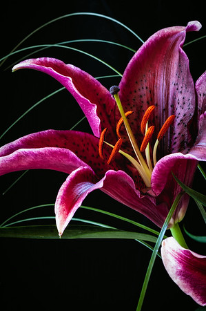 Floral Close-up<br /> © Sharon Thomas