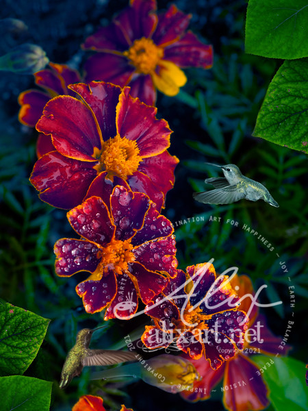 Flower Dew Drop Hummingbirds