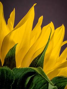 Sunflower Crown