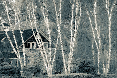 """The River Birches"" by A.E. Amador"