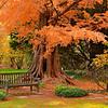 """""""Garden Retreat"""" by Sue Davis"""