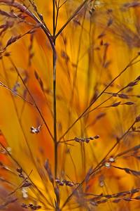 """""""Autumn Grasses"""" by Tim Davis"""