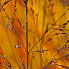 """Autumn Grasses"" by Tim Davis"