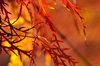 """Fall Fire"" by Tim Davis"
