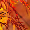 """Fall Fire"" by Tim Davis"