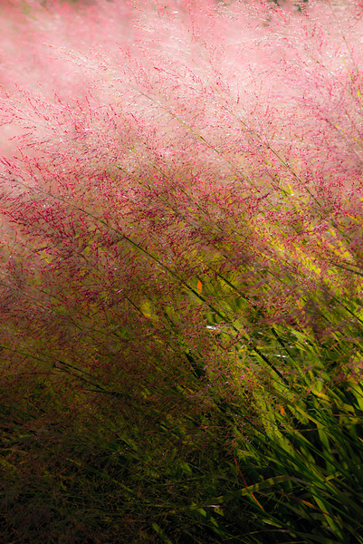 """Summer Grasses"" by A.E. Amador"