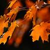 """""""Leaf Motif"""" by Sue Davis"""