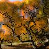 """""""Fiery Roar"""" by A.E. Amador"""