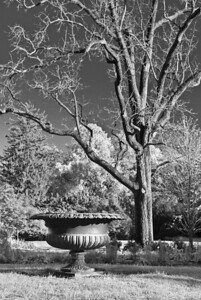 """""""The Urn and the Great Black Walnut"""" by A.E. Amador"""