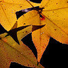"""Dancing Leaves"" by Mary Roby"