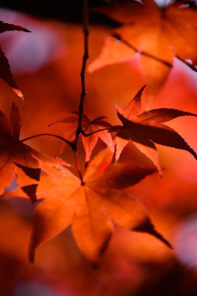 """""""Maple Melange"""" by Sue Davis"""