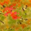 Fall Impressions