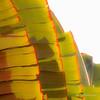 Golden Plantain 045-aeamador