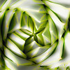 Spiral Aloe-aeamador-
