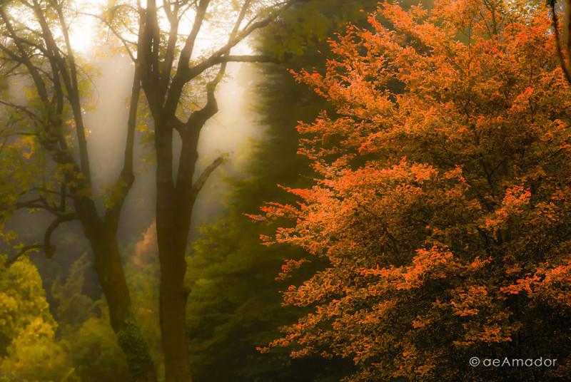 Early Fall at Cylburn-aeamador-004118
