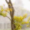 Cylburn Arboretum-aeamador-004113