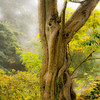 Cylburn Arboretum-aeamador-004074