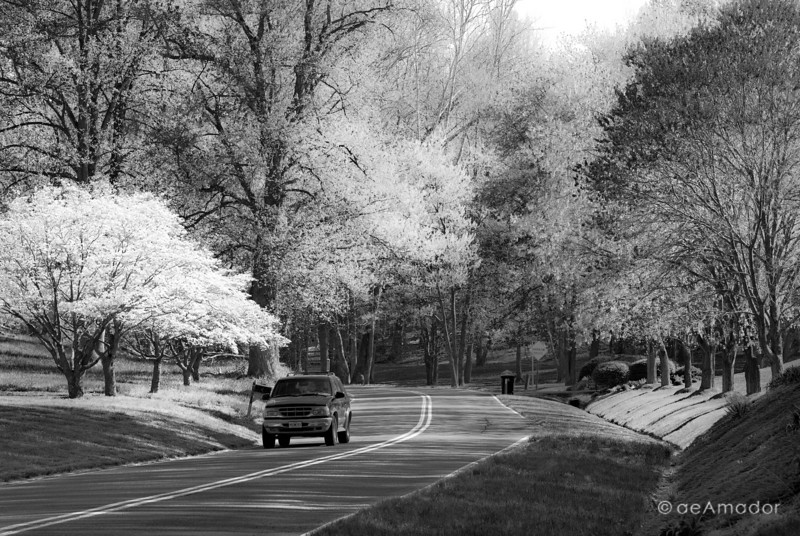 Spring Road to Fairhaven