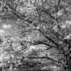 """Cherry Blossom by the Lake""<br /> _DSC0376aeamador©-MDSC"