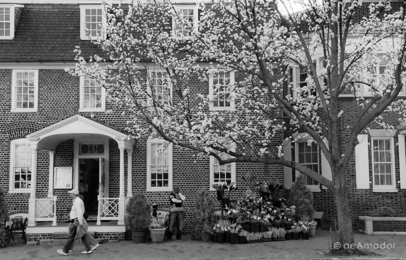 """Pear at Annapolis""<br /> _DSC0202aeamador©-MDSC"