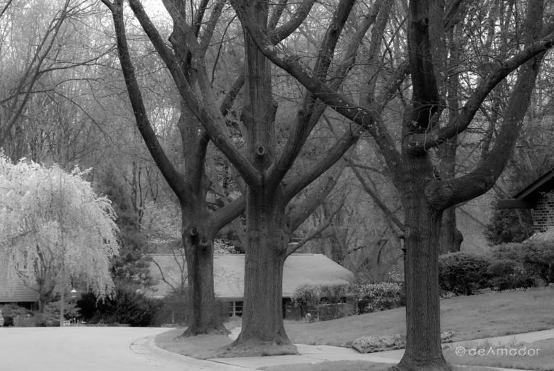 """Street of the Weeping Cherry""<br /> ©aeamador-0131aeamador©-MDSC"