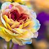 Neon Rose 1