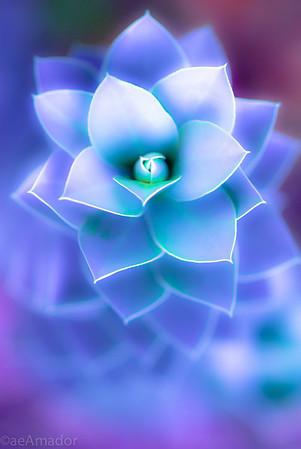 Neon Blooms