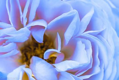 Neon Rose 3
