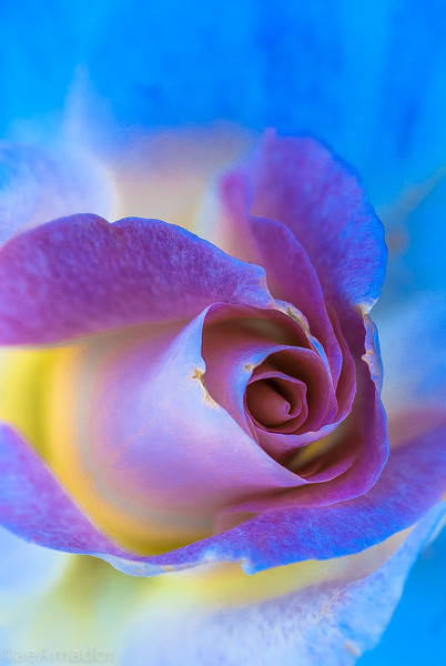 Neon Rose 2