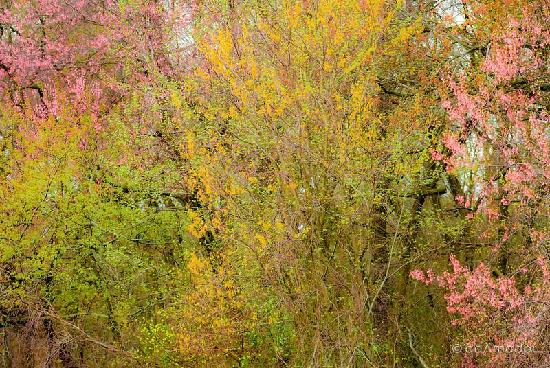 Joyful Expression of Spring