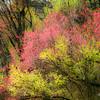 Spring Monet-aeamador_DSC0030