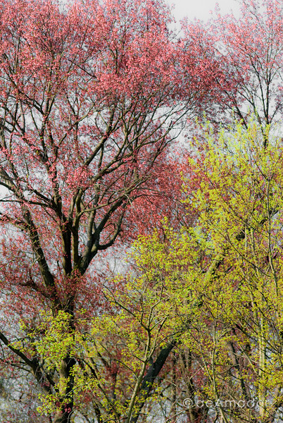 Spring Trees Duo
