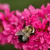 Bee Good !