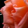 Une rose à la sainte Baume...
