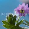 Tiny Purple Flower Closeup