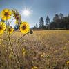 Sunshine and Mountain Meadow