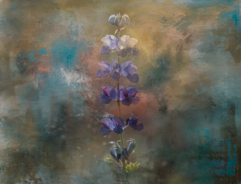 Painterly Textures and Lupines, Mountain Meadow