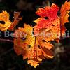 Backlit Grape Leaves