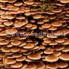 Mushrooms, Bartlett Cove, Glacier Bay, Alaska