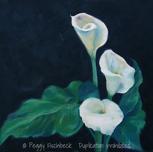Calla Lillies 18x18  oil on canvas