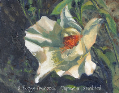Old Rose, Sebastopol 11x14  oil on canvas