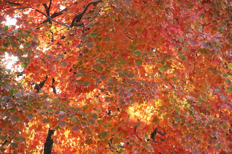 Multicolor Fall Leaves